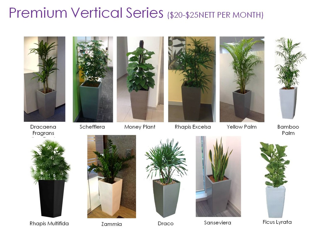 Plant Rental Vitae Plants An Eco And Horti Enterprise Providing